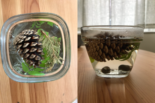 Two side-by-side images of a pine cone submerged in a glass bowl filled with water.