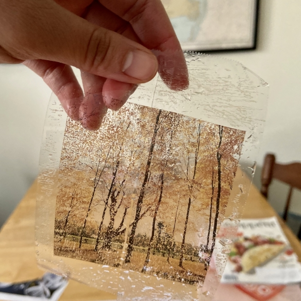 A sepia-colored image of trees on two roles of transparent tape.