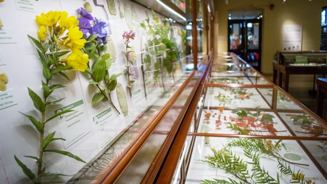 Glass Flowers at Harvard Museum of Natural History