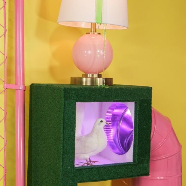 A white dove in a pastel colored domestic space